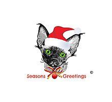 Devon Rex Christmas Kitten with text by devonzone