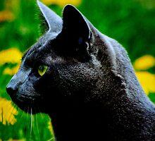 The cat who got the creammmmmm by Arthur Chambers