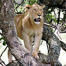 Tree lion by Sharon Bishop