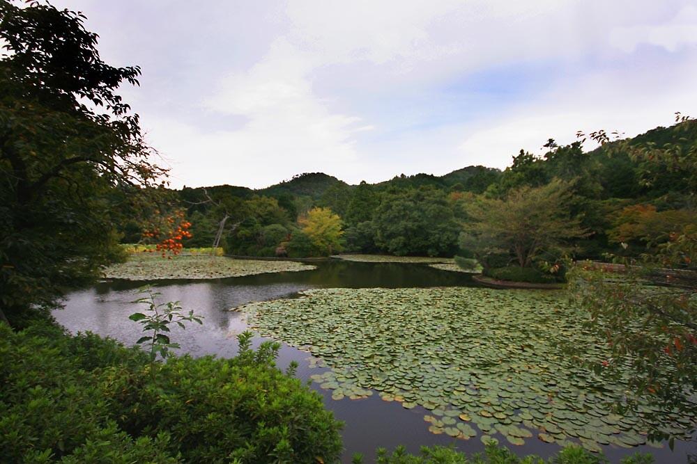 Kyoyochi Pond - Ryoanji Temple - Kyoto (Rock Garden) by Trishy