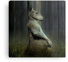 Portrait of a Kangaroo Metal Print