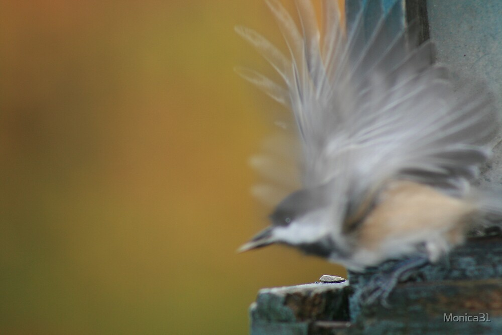 chickadee taking flight by Monica31