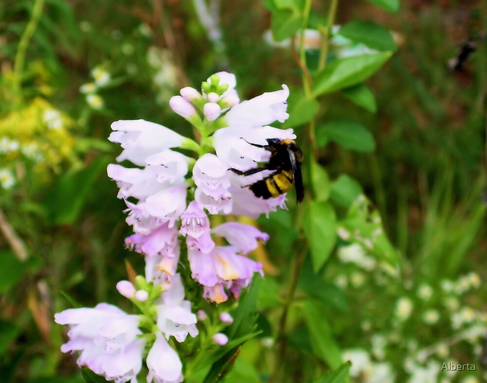 Bee On Pink Flower by Alberta