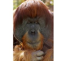 Old man Orang Utan Photographic Print