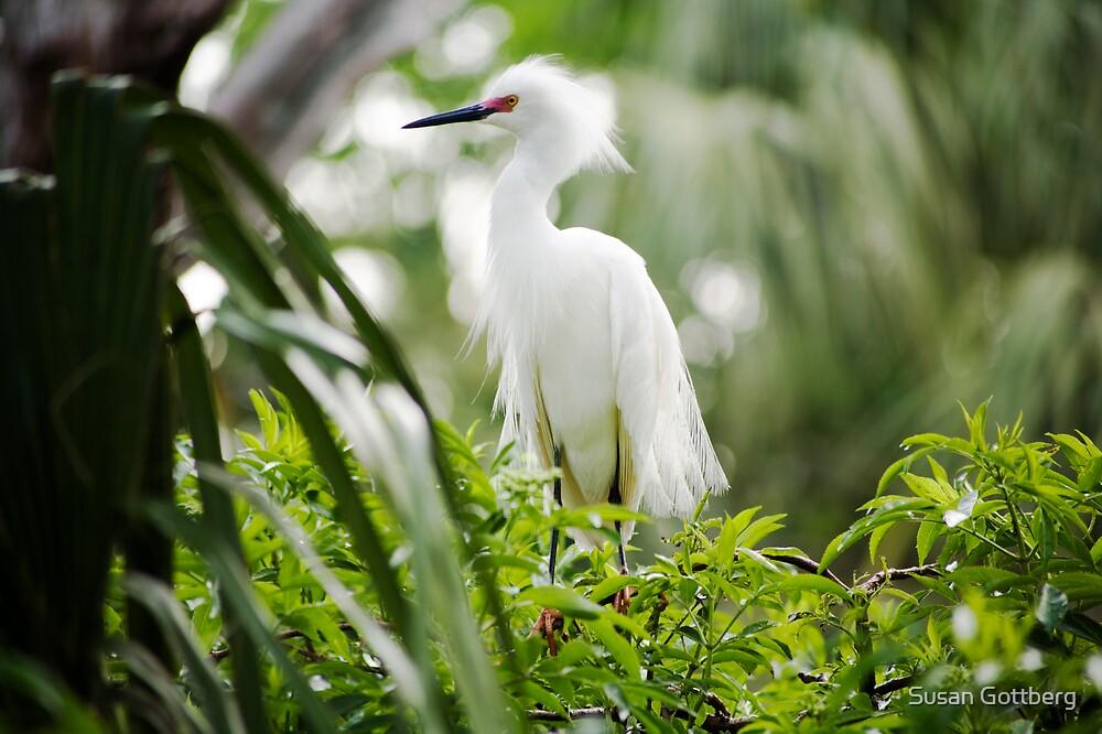 Snowy Egret by Susan Gottberg