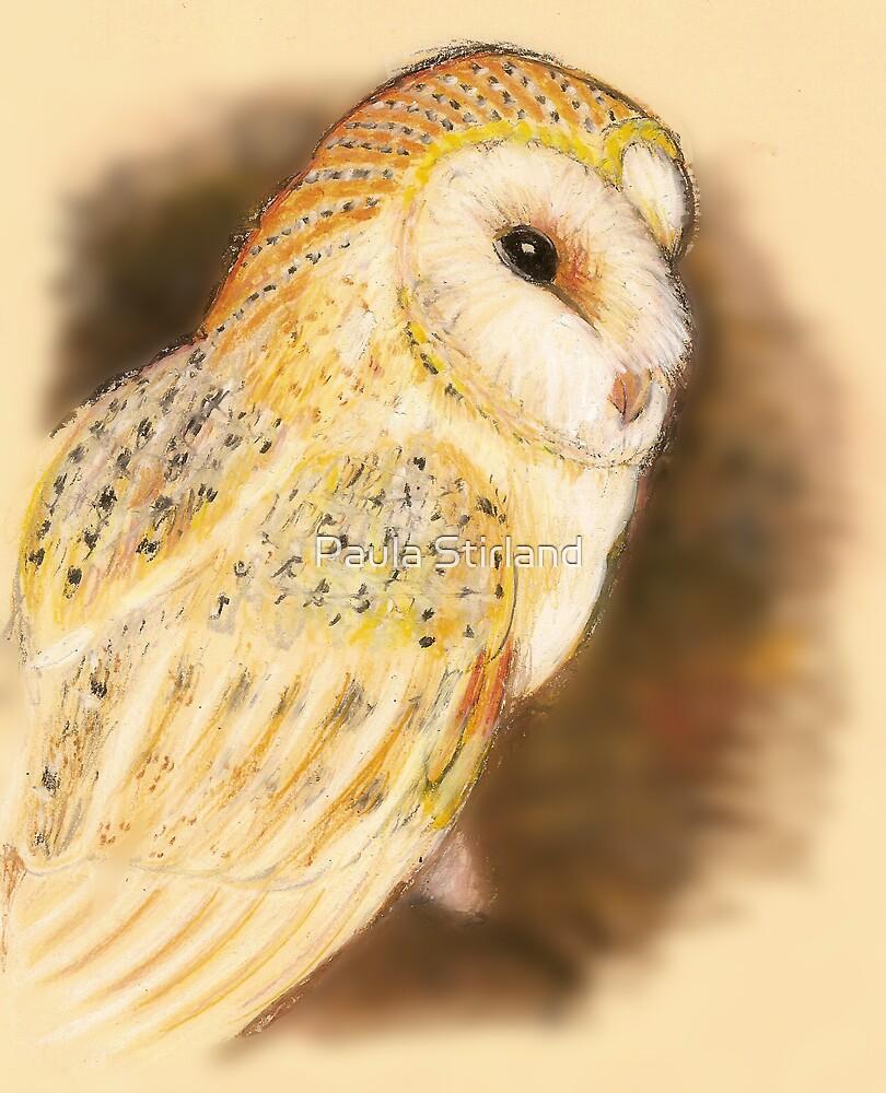 Pastel Owl by Paula Stirland