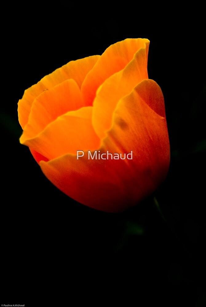 california poppie3 by P Michaud