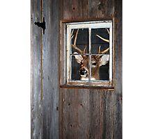 Buck Season Photographic Print