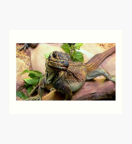 Philippine Sail-Finned Water Dragon Art Print