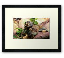 Philippine Sail-Finned Water Dragon Framed Print