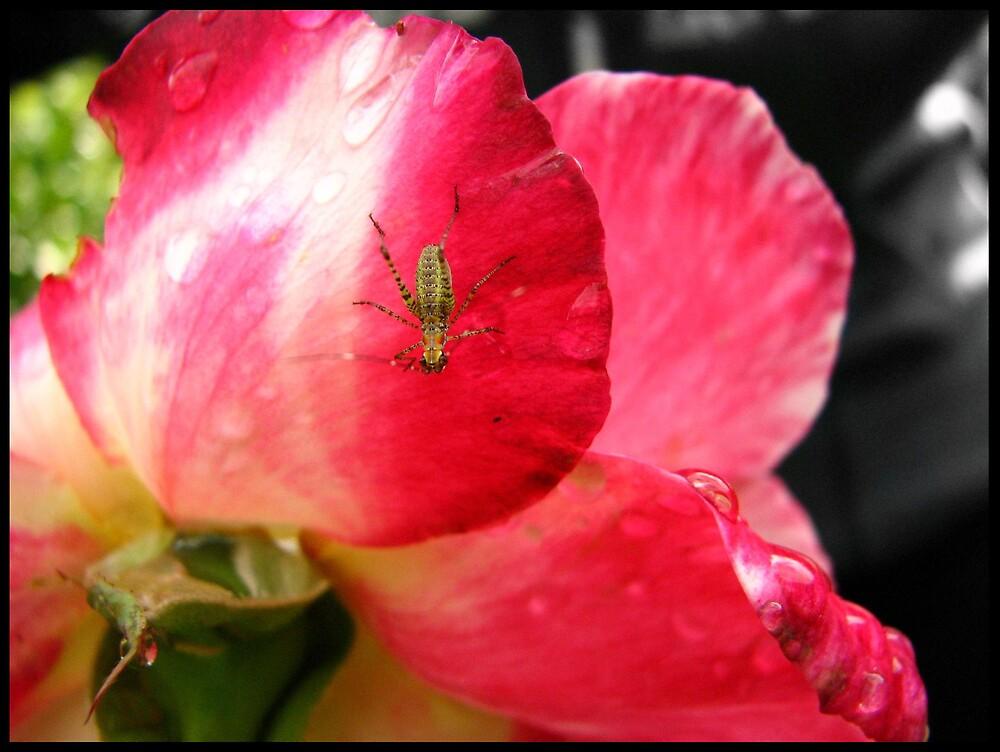 Rain has ended, bugs rejoice. by Melissa  Carroll