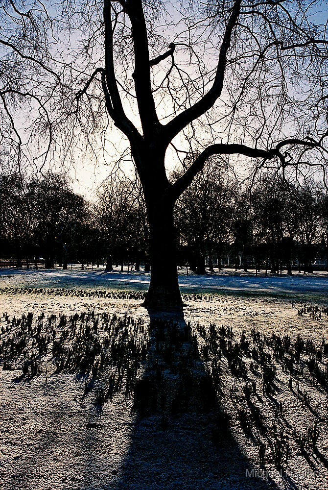 Cold Tree by Michael Naylor