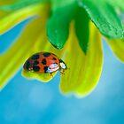 Ladybug II by Leisa  Hennessy