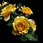 Gold Roses by Jan Hopgood