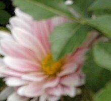 Crysanthymum pink, by missgraice