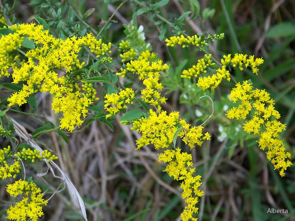 Beautiful Yellow Flowers by Alberta