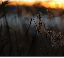 The poem of the fading light by Alpo Syvänen