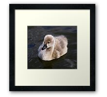 The ugly duckling.....not! Framed Print