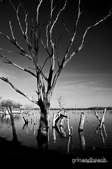 B/W Trees by grinandbearit