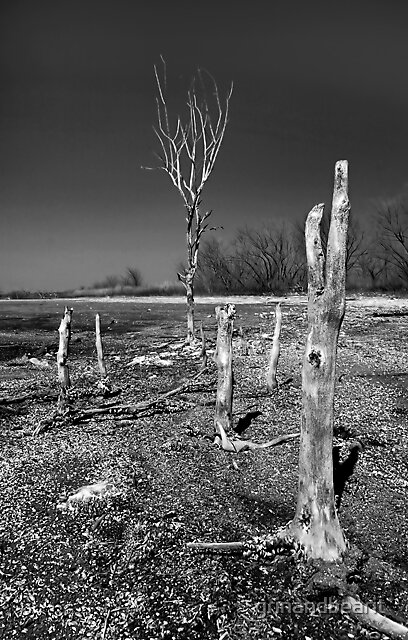 B/W Tree Stumps by grinandbearit