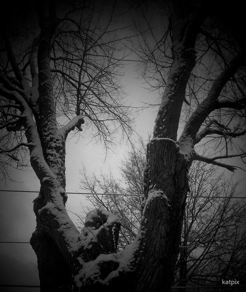 Tree in Winter by katpix