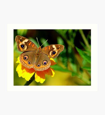 Butterfly Macro Art Print