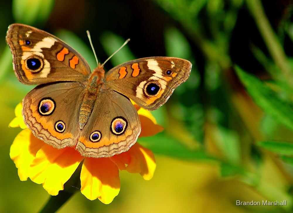 Butterfly Macro by Brandon Marshall