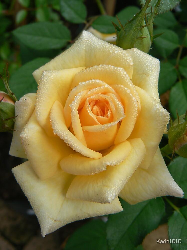 Yellow rose by Karin1616