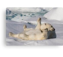 Polar Bear Cubs Canvas Print