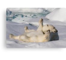 Polar Bear Cubs Canvas Print