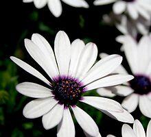 Floral White by grinandbearit