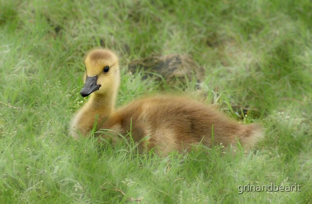 Gosling by grinandbearit