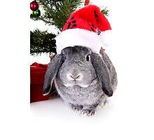 Christmas Rabbit Photographic Print