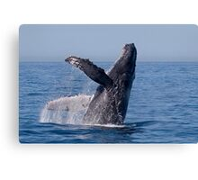 Humpback Breaching Canvas Print