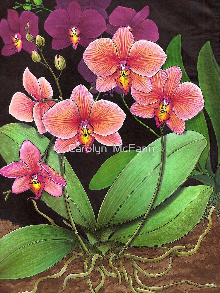 Phalaenopsis Orchid Study by Carolyn  McFann
