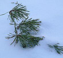 Solitude of Winter by Sherri Hamilton