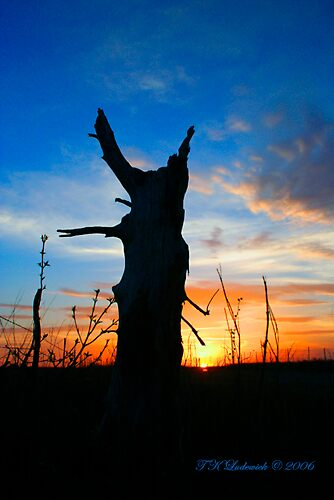 Stump Silhouette by grinandbearit