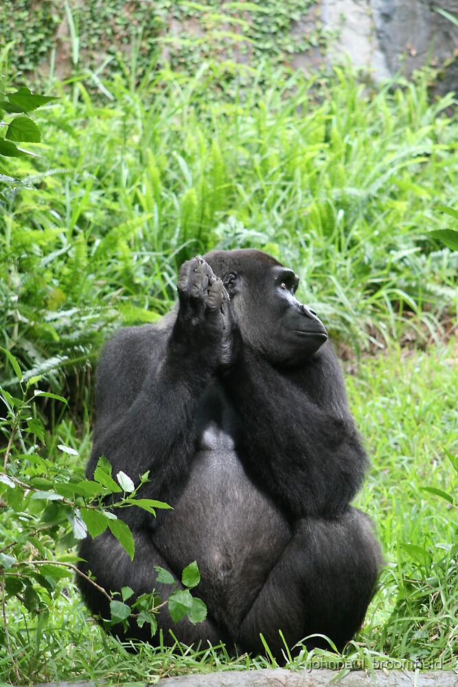 Man Versus Gorilla by johnpaul  broomfield