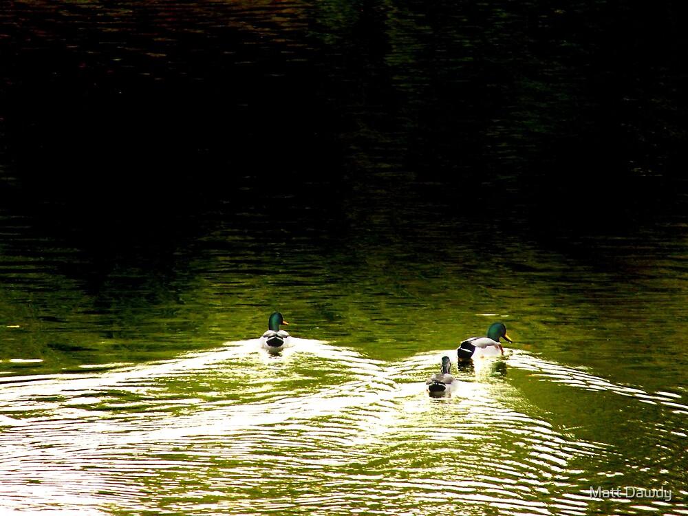 Water Gliders by Matt Dawdy