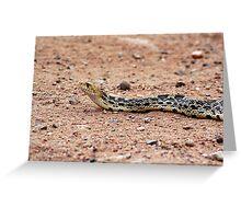 bull snake Greeting Card
