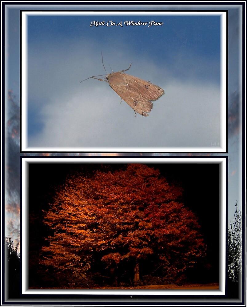 Moth On A Window Pane by tim100