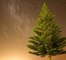 Night time pine by Oliver King