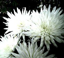 Snow Flower black and white chrysanthemum photography art by 7RayedDesigns