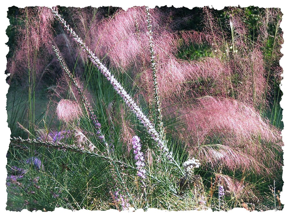 Pink Feather Grasses by Judy Gayle Waller