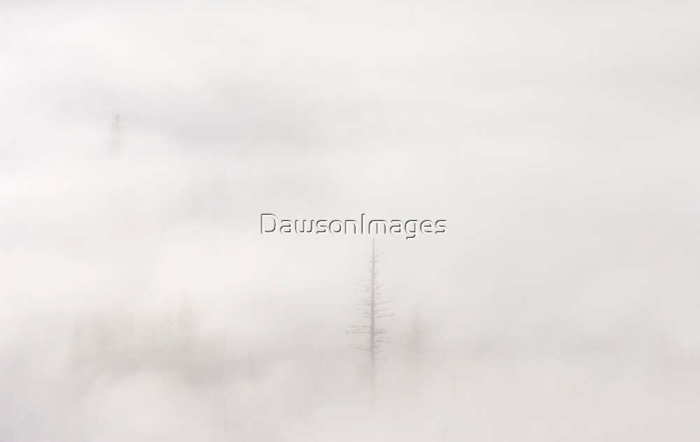Above the Clouds by DawsonImages