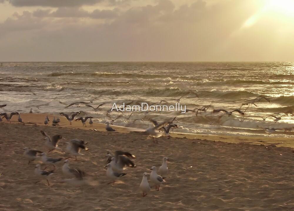 Kings Beach by AdamDonnelly