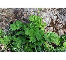 plants & stone Photographic Print