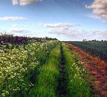 Rural Field Path by Vicki Field