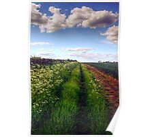 Rural Field Path Poster