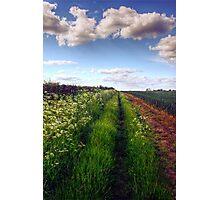Rural Field Path Photographic Print